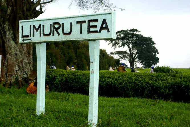 Limuru Tea blames drought for half year net loss